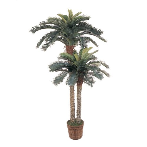 Sago Palm Double Potted Tree in Basket