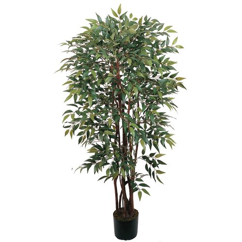 Silk Similax Tree in Pot