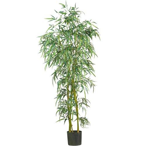 Fancy Style Bamboo Tree in Pot