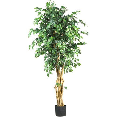 Palace Style Ficus Tree in Pot