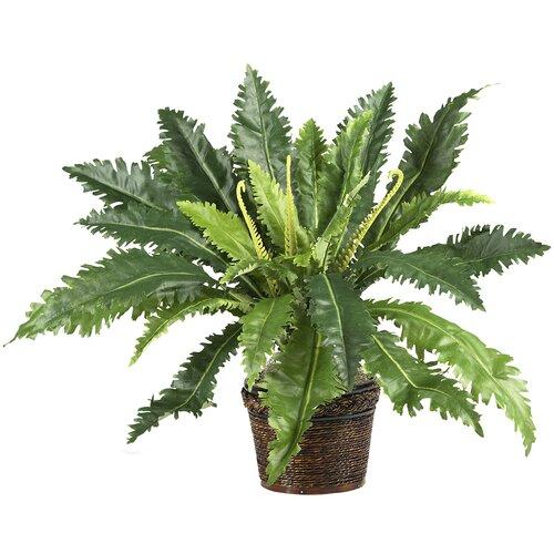 Nearly Natural Silk Marginatum Desk Top Plant in Pot
