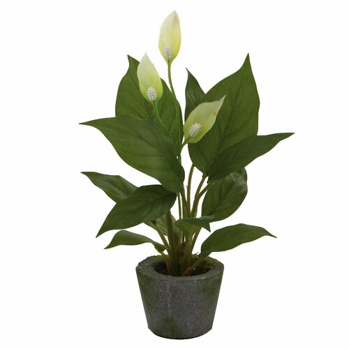 Nearly Natural Nearly Natural Spathyfillum Desk Top Plant in Pot