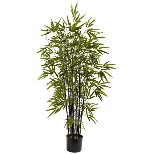 Black Bamboo Tree in Pot