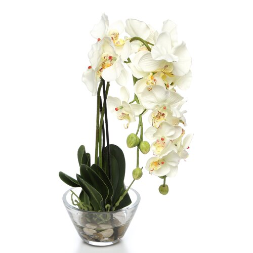 Phalaenopsis Silk Orchid Arrangement in White with Glass Vase