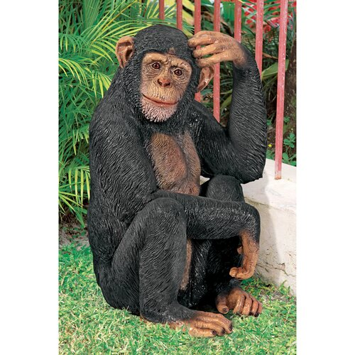 Design Toscano Chauncey the Confused Chimp Garden Monkey Statue