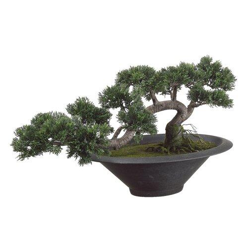 Allstate Floral Trailing Cedar Artificial Bonsai Desk Top Plant in Pot