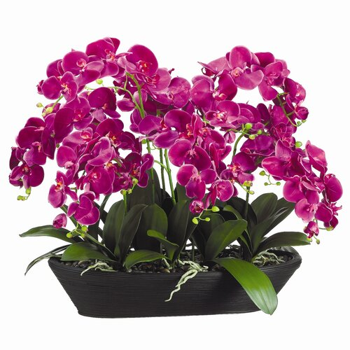"""Allstate Floral 27"""" Phaleaenopsis with Oval Bamboo with Container"""