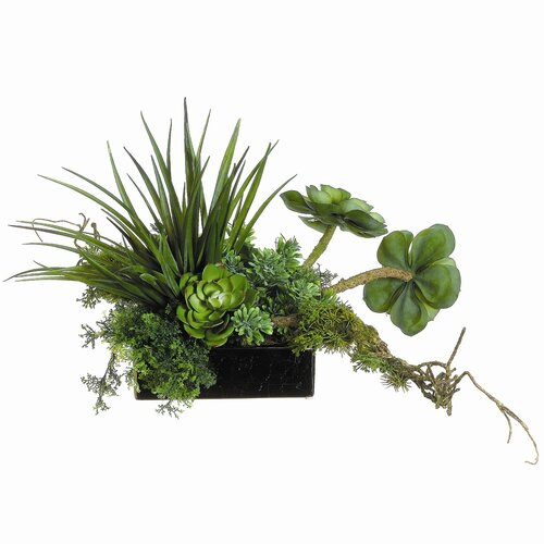 Allstate Floral Succulents in Square Ceramic Container