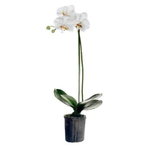 Tori Home Phalaenopsis Plant in Clay Pot