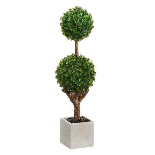 Baby's Tear Double Ball Square Topiary in Pot