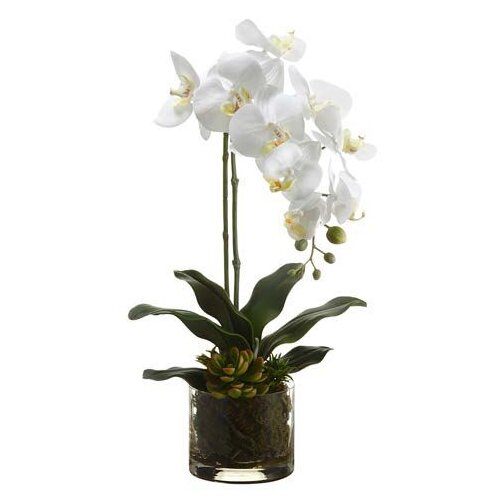 Tori Home Phalaenopsis Plant / Echeveria in Glass Vase