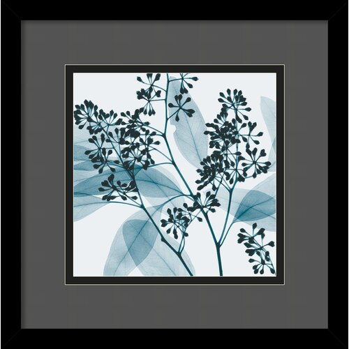 Amanti Art 'Eucalyptus II' by Steven N. Meyers Framed Photographic Print