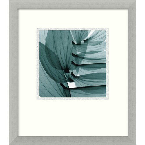Amanti Art 'Lily Leaves' by Steven N. Meyers Framed Photographic Print
