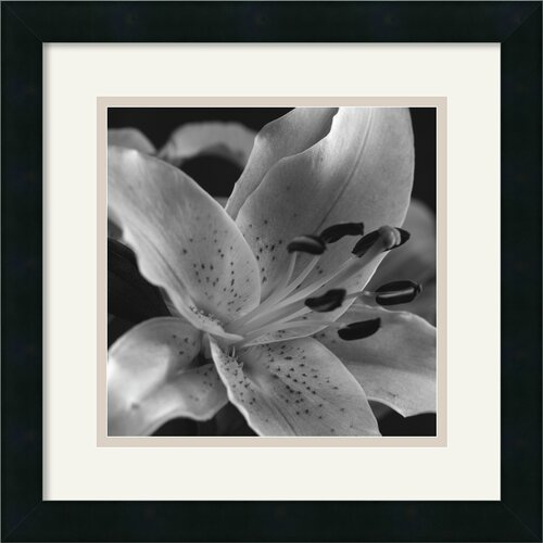 Amanti Art 'Speckled Lily' by Gaetano Framed Photographic Print