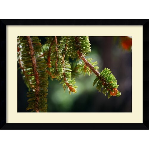 'Bristlecone Pine' by Andy Magee Framed Photographic Print