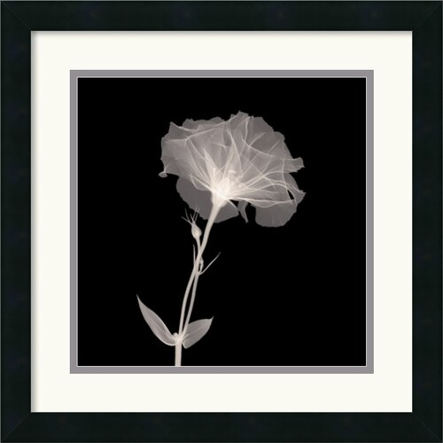 Amanti Art Bud in Bloom Framed Photographic Print