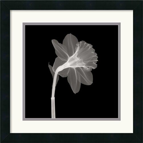 Amanti Art Veiled Blossom Framed Photographic Print