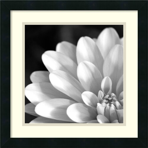 Amanti Art Radiating Petals Framed Photographic Print