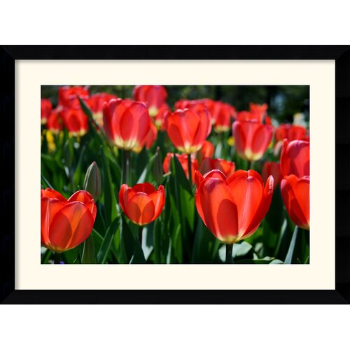 Amanti Art 'In the Garden' by Andy Magee Framed Photographic Print