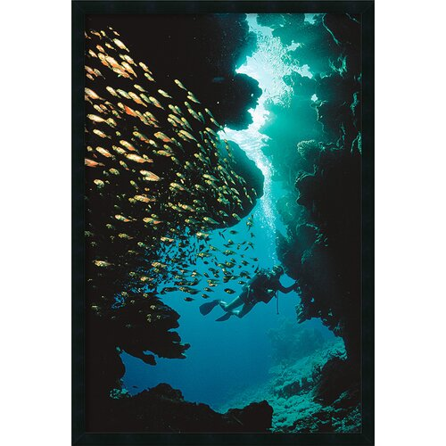 Amanti Art Scuba Diving Framed Photographic Print
