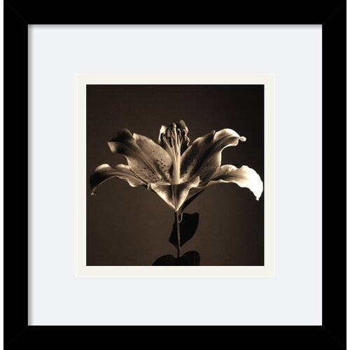 Amanti Art 'Flower Series IV' by Walter Gritsik Framed Photographic Print