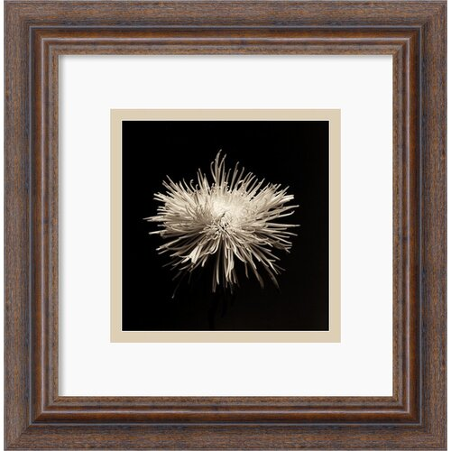 'Flower Series I' by Walter Gritsik Framed Photographic Print