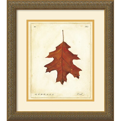 'Oak Leaf' by Meg Page Framed Graphic Art