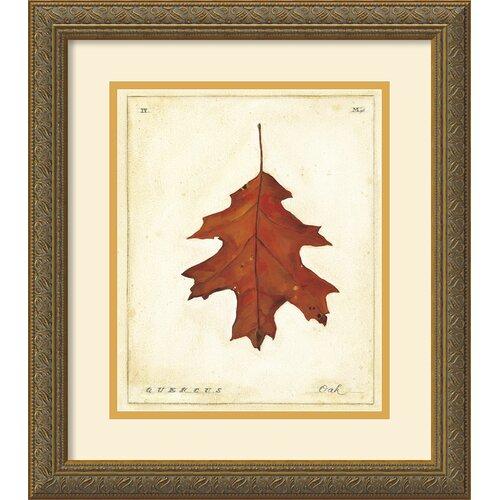 'Oak Leaf' by Meg Page Framed Graphic Art