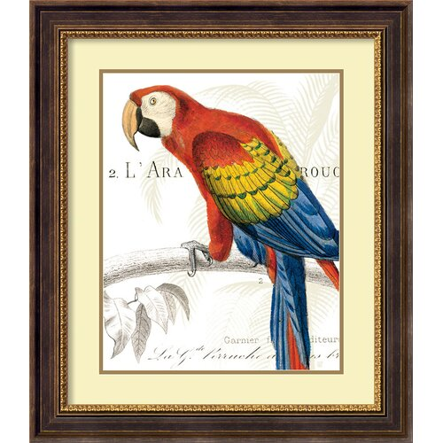 'Parrot Botanique II' by Wild Apple Portfolio Framed Graphic Art