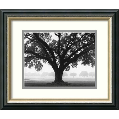 'Silhouette Oak' by William Guion Framed Photographic Print