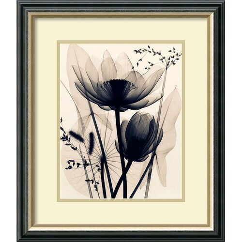 'Lotusand Grasses' by Judith McMillan Framed Graphic Art