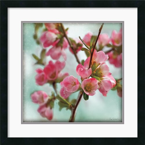 Amanti Art 'Quince Blossoms II' by Sue Schlabach Framed Photographic Print