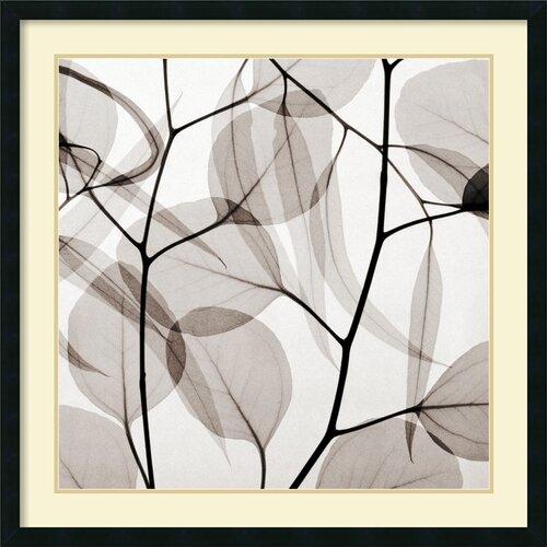 'Eucalyptus Leaves (Positive)' by Steven N. Meyers Framed Graphic Art