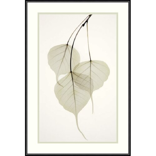 'Bo Tree' by Albert Koetsier Framed Photographic Print
