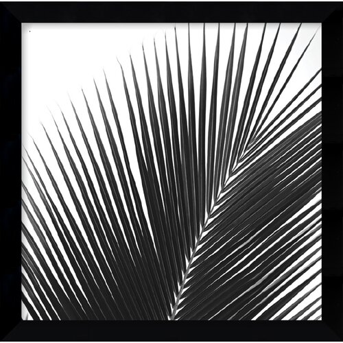 'Palms 14 (Detail)' by Jamie Kingham Framed Photographic Print