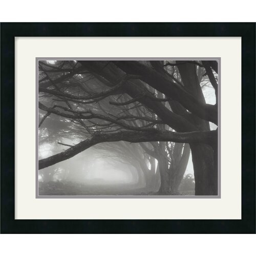 Amanti Art 'Cypresses, Skyline Drive, South San Francisco' by Mark Citret Framed Photographic Print