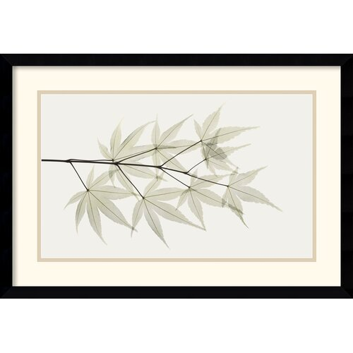 'Japanese Maple' by Albert Koetsier Framed Graphic Art