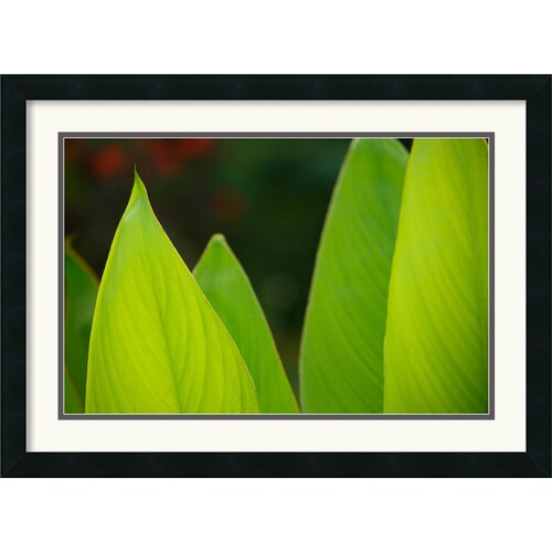 Amanti Art 'Vibrant Green Leaves' by Andy Magee Framed Photographic Print
