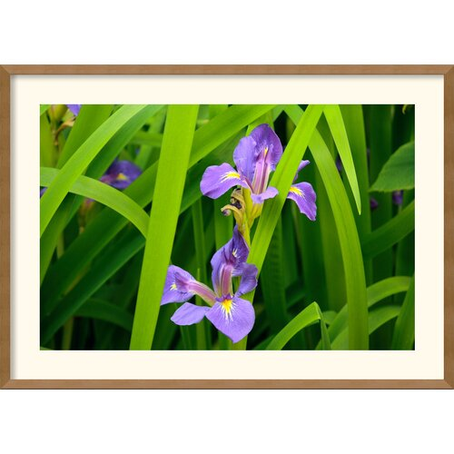 Amanti Art 'Purple Iris' by Andy Magee Framed Photographic Print