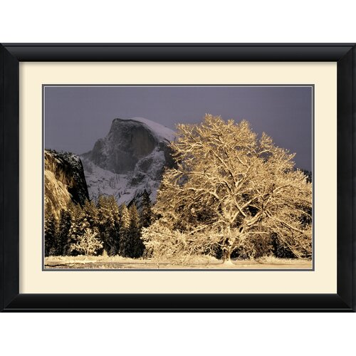 'Half Dome & Elm' by William Neill Framed Photographic Print