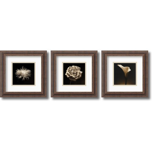 Amanti Art 'Flower Series' by Walter Gritsik 3 Piece Framed Photographic Print Set