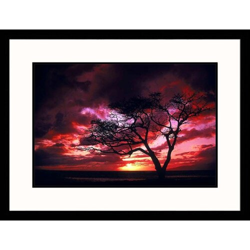 Great American Picture Seascapes 'Silhouetted Tree' at Sunset by Mick Roessler Framed Photographic Print