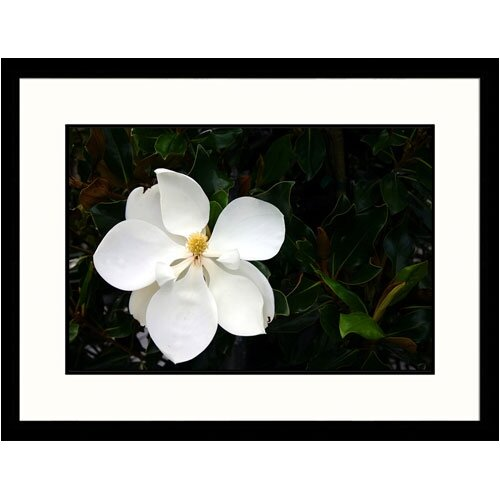Great American Picture Florals White Magnolia Framed Photographic Print