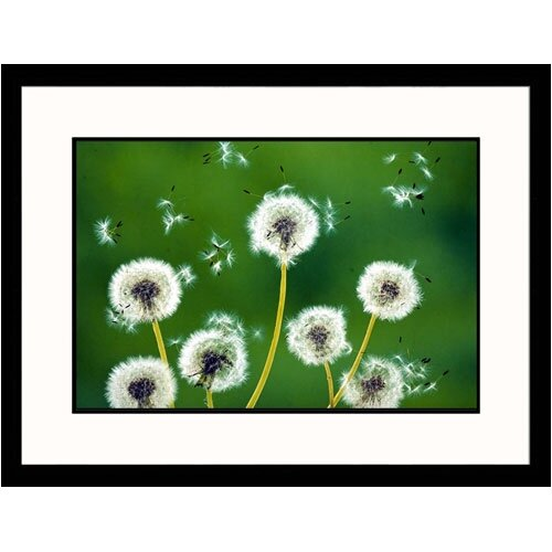 Great American Picture Florals Dandelions Framed Photographic Print