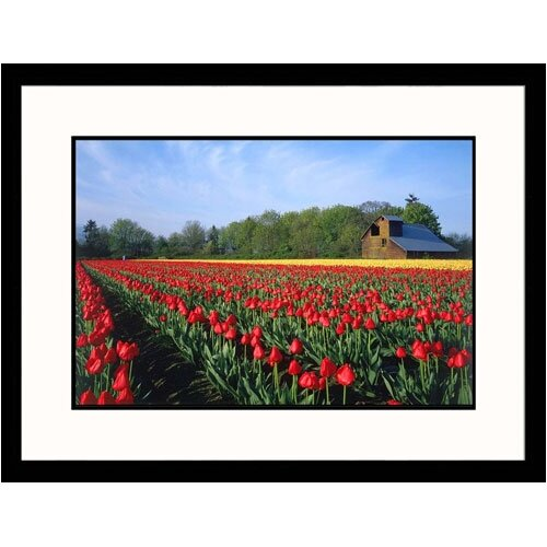 Great American Picture Florals Tulip Field Framed Photographic Print