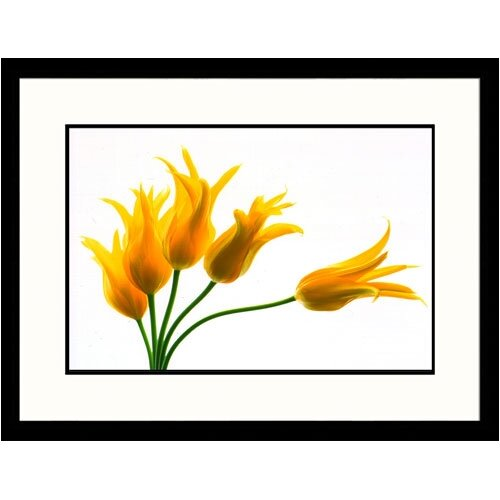 Great American Picture Florals Yellow Tulips Framed Photographic Print