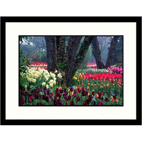 Florals Tulips Display Framed Photographic Print