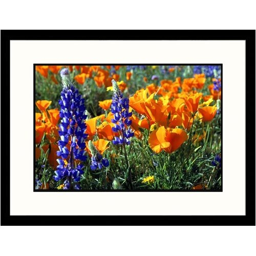 Great American Picture Florals Poppies Tehachapi Framed Photographic Print