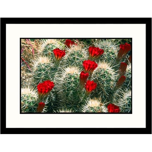 Great American Picture Florals Flowering Cacti Framed Photographic Print