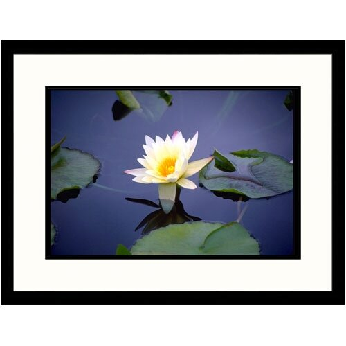 Florals Yellow Lily on Pond Framed Photographic Print